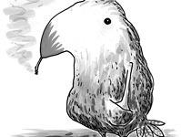 Birdopush