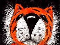 Maca Tigar